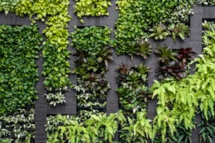 Living Walls, New for 2021